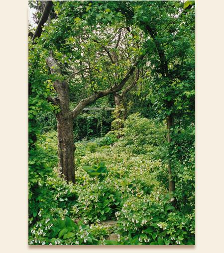 Naturnahe pflanzungen 2 susbauer gaerten for Naturnahe gartengestaltung